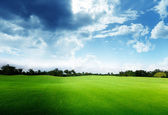 Green field and trees — Stock Photo