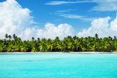 Palms and caribbean sea — Stock Photo