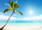 Caribische zee en coconut palm — Stockfoto