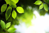 Leaves in deep forest — Stock Photo