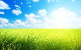 Field of grass (shallow DOF) — Stock Photo