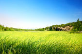 Field of grass in north mountain (shallow DOF) — Stock Photo
