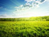 Zonsondergang in voorjaar bos — Stockfoto