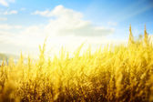 Yellow autumn grass and sunset — Stok fotoğraf