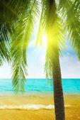 Palm e manhã mar — Fotografia Stock