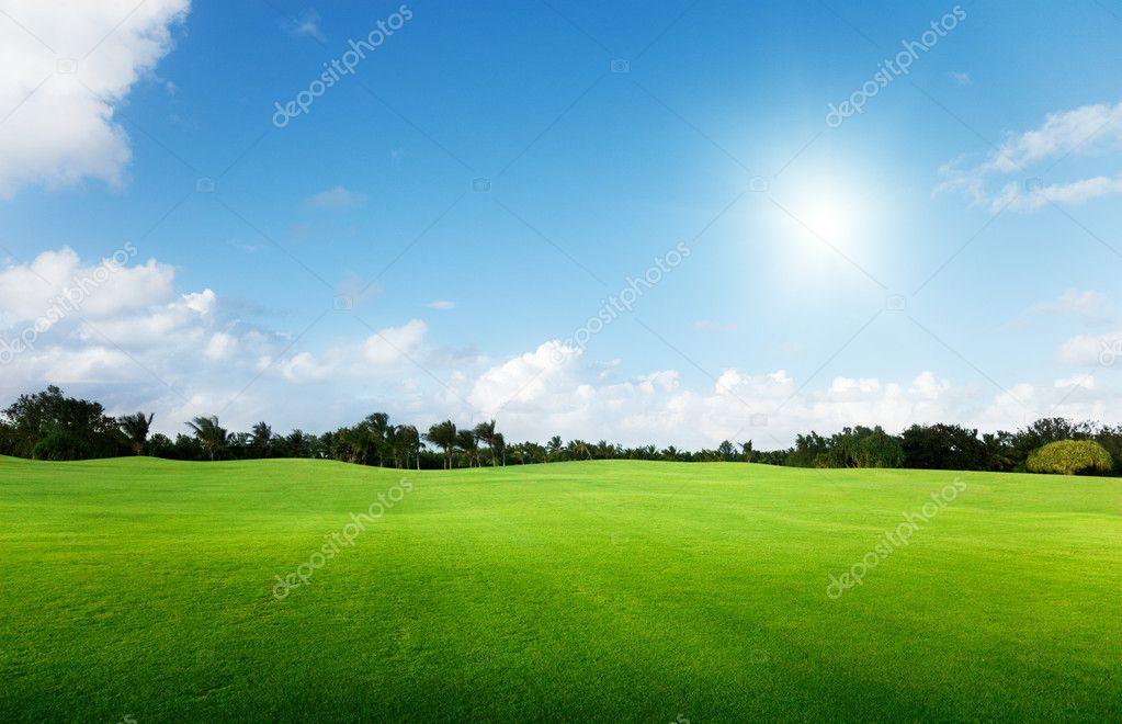 Фотообои Зеленое поле и деревья