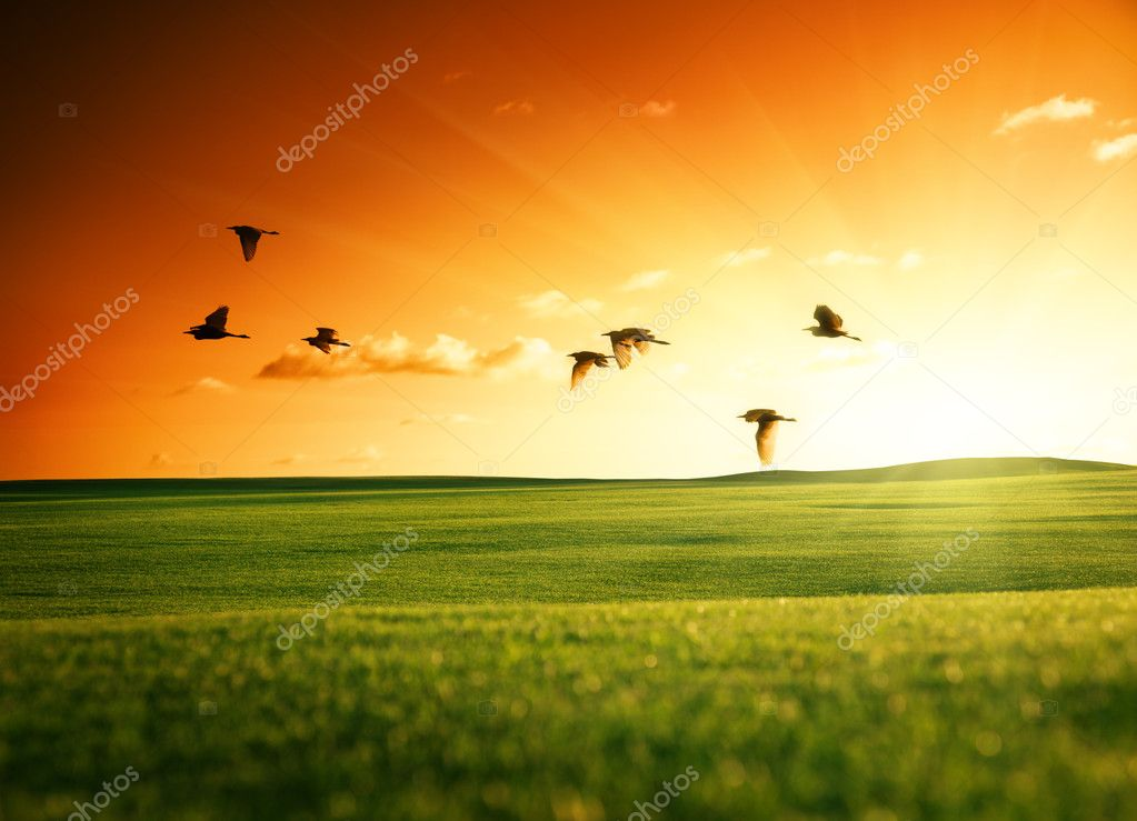 Field of grass and flying birds  Stock Photo #4492635