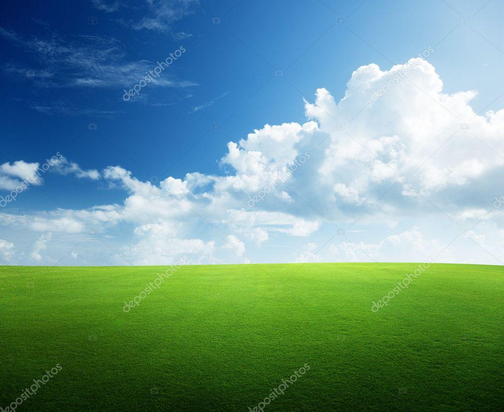 Фотообои Полевые травы и идеальное небо