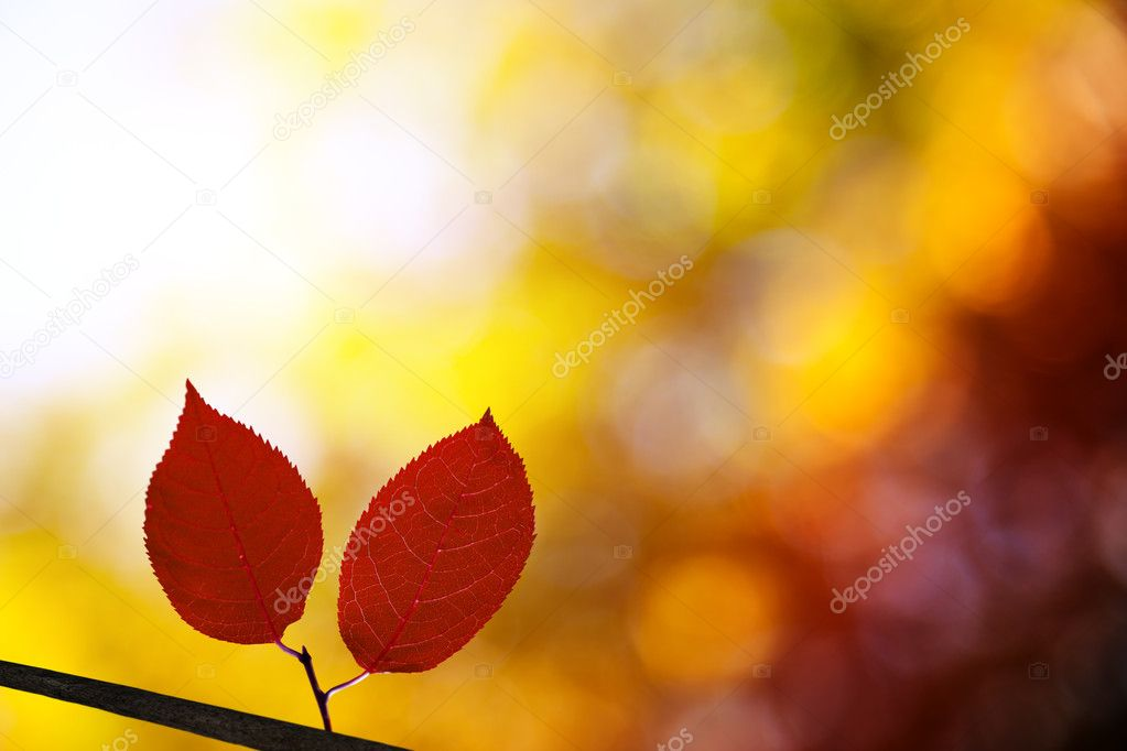 Red autumn leaves in forest — Stock Photo #4494034