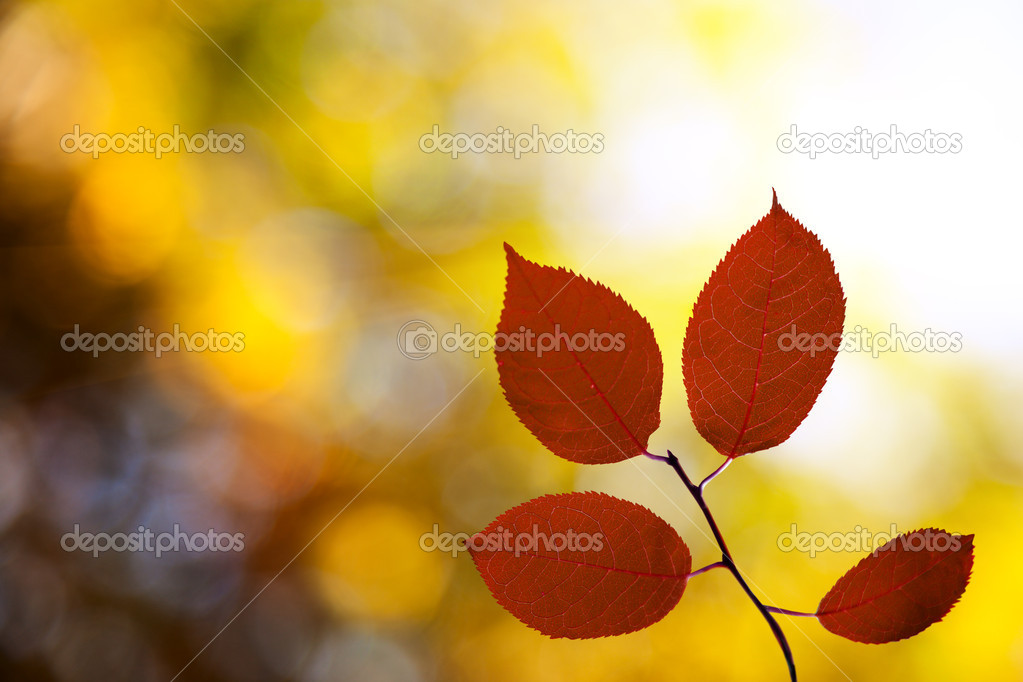 Red autumn leaves in forest — Stock Photo #4494044