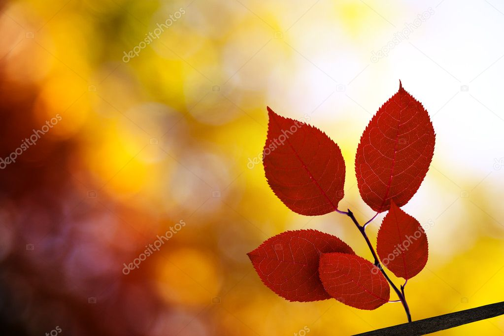 Red autumn leaves in forest — Stock Photo #4494052