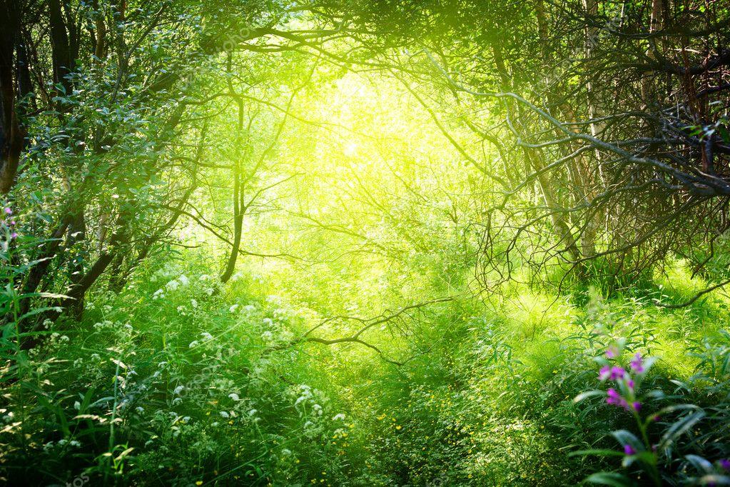 Фотообои Солнечный день в глубоком лесу