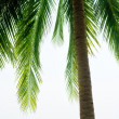 Palm and morning sea — Stock Photo