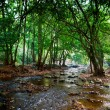 River in deep forest — Stockfoto