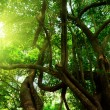 Sun in forest — Stock Photo