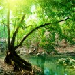 River in deep forest - Stock Photo
