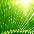 Leaves of palm and morning light — Stok fotoğraf