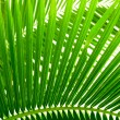 Leaves of palm and morning light — Foto Stock