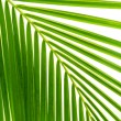 Stok fotoğraf: Leaves of palm and morning light