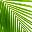 Leaves of palm and morning light — Stockfoto