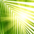 Leaves of palm and morning light — Stock Photo #4606848