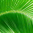 Leaves of palm and morning light — Stockfoto #4606854
