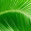 Leaves of palm and morning light — Stock Photo #4606854