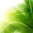 Leaves of palm and morning light -  