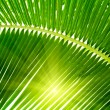 Leaves of palm and morning light — Stock fotografie