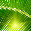 Leaves of palm and morning light — Stock Photo #4606897