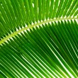 Leaves of palm and morning light — Foto de Stock