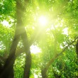 Rays of sun in deep forest — Stock Photo