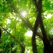 Rays of sun in deep forest — Stock Photo #4606916