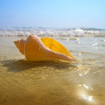Seashell sand and ocean — Stock Photo