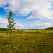 Tundra of north Russia - Stock Photo