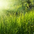 Royalty-Free Stock Photo: Sunlight in deep forest