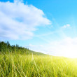 Grass and perfect sky — Stock Photo