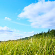 Grass and perfect sky — Stock Photo #4607541