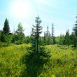 Stock Photo: North mountain forest