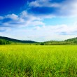 Grass and north mountain — Stock Photo