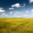 Field of grass — Foto Stock
