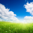 Field of fresh summer grass and clouds — Stock Photo #4607903