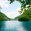 Lake in deep forest — Stock Photo