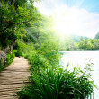 Lake in deep forest and way — Stock Photo