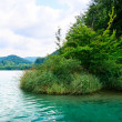 Lake in forest — Stock Photo