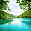 Lake in deep forest — Stock Photo #4608105