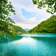 Lake in deep forest — Stock Photo #4608114