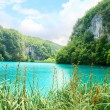 Lake in deep forest — Stock Photo #4608121