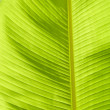 Stock Photo: Leaf banana palm