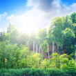 Stock Photo: Deep forest